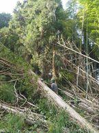 台風21.22号被害